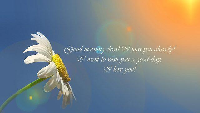 good morning sunflower love