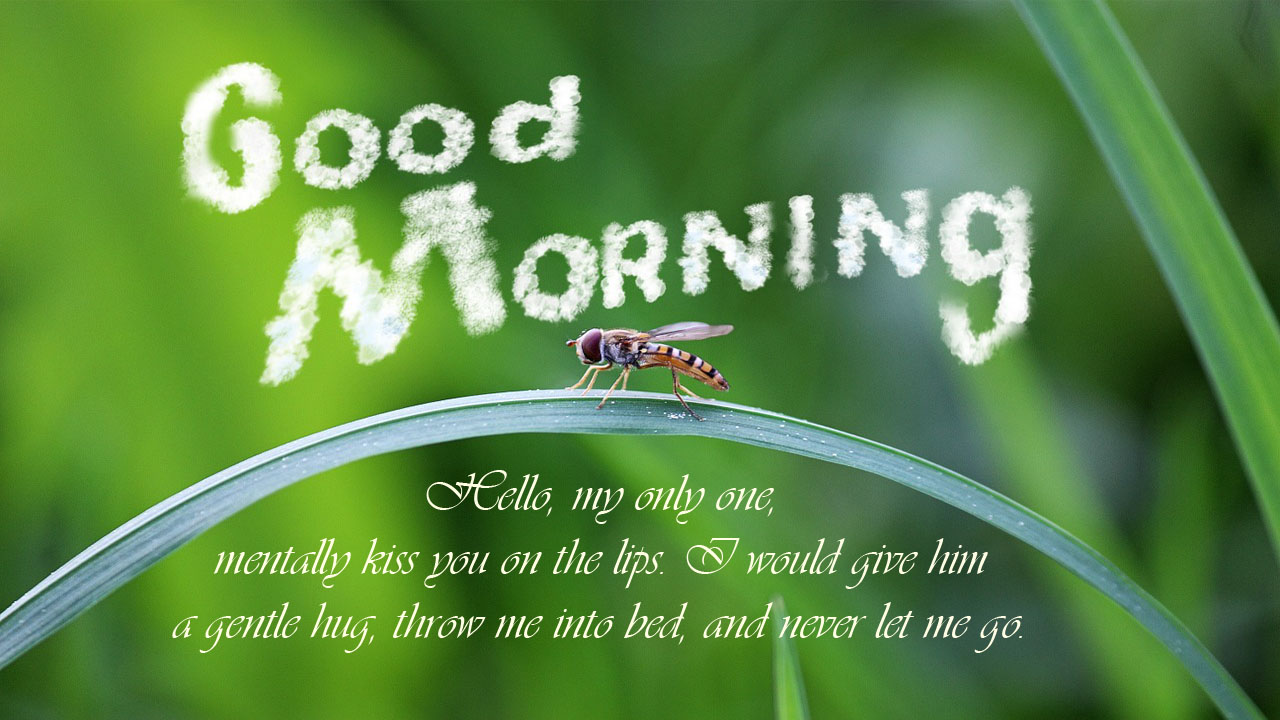 honey bee morning love message